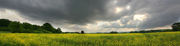 Yellow field before the storm. Stitched Panorama of landscape with yellow plants and stormy sky royalty free stock photos