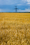 Yellow field stock photos