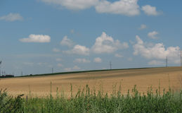 Yellow field. Of wheat, green grass and blue sky Stock Photos