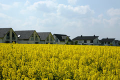 Yellow field - white houses. Newly built white homesteads in the middle of an agriculture area with a blooming canola field stock photography