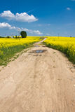 Yellow fields Stock Photos