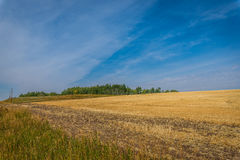 Yellow fields, blue sky Stock Image