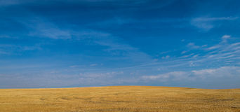 Yellow fields, blue sky Royalty Free Stock Photos