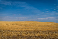Yellow fields, blue sky Stock Images