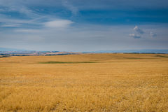 Yellow fields, blue sky Stock Photography