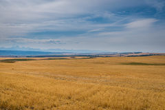 Yellow fields, blue sky Royalty Free Stock Images