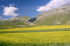 Yellow fields in Castelluccio Stock Photography