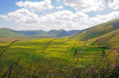 Yellow fields in Castelluccio Royalty Free Stock Photo