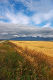 Yellow fields, clouds and mountains. Stock Photography
