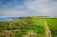 Yellow fields and coastlne in Normandy, hiking path Royalty Free Stock Image