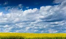Yellow fields, flowers of rape, colza. Agriculture, spring in Czech Republic royalty free stock photos