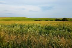 Yellow fields of grass with blue sky and mountains in background. Small trees, summer time. royalty free stock photos