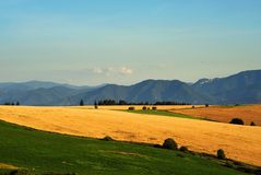 Yellow fields and green meadows Royalty Free Stock Photos
