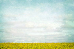 Yellow fields landscape. Vintage background royalty free stock photos