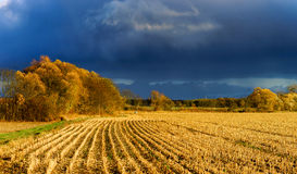 Yellow fields at last autumnal days Stock Photos