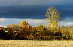 Yellow fields at last autumnal days Royalty Free Stock Photos