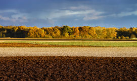 Yellow fields at last autumnal days Stock Photo