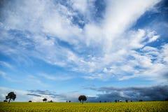 Yellow fields Royalty Free Stock Photo