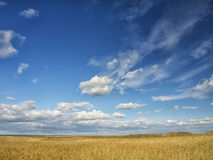 Yellow fields under a dramatic blue sky with white clouds nearby the ancient greek colony of Histria, on the shores of Black Sea. Royalty Free Stock Images