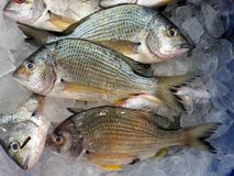 Yellow Fin Bream Fish on Ice, Sydney Fish Markets. Fresh yellow fin bream fish, Acanthopagrus australis, also known as  sea bream, on ice for sale at the Sydney Stock Image