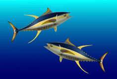 Yellow fin tuna Stock Photos