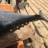 Tuna Tail. Yellow fin tuna tail Stock Image
