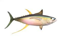 The Yellow fin Tuna. Royalty Free Stock Photo
