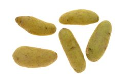 Yellow Fingerling Potatoes On A White Background Stock Image
