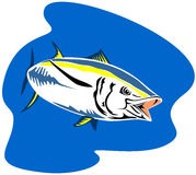 Yellow finned tuna Stock Images