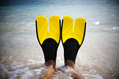Yellow fins Stock Photography