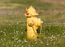 Yellow fire hydrant on a city sidewalk Stock Photos