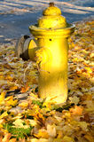 Yellow fire hydrant and leaves Royalty Free Stock Photos
