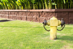 Yellow fire hydrant at strategic residential ready for emergency Royalty Free Stock Image