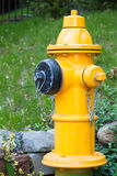 Yellow Fire Hydrant in Toronto Stock Photography