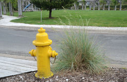 Yellow Fire Plug by Park Royalty Free Stock Images