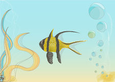 Yellow fish Royalty Free Stock Photo