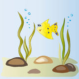 Yellow fish in the algae. Cute little yellow fish among algae and Puzikov air Royalty Free Stock Images
