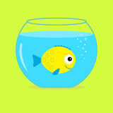 Yellow  fish in the aquarium. Card. Stock Photo