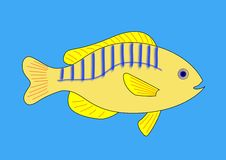 Yellow Fish With Blue and Red Stripes Stock Images