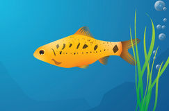 Yellow fish. Illustration of a yellow fish in the sea Royalty Free Stock Photography