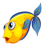 A yellow fish Stock Photo