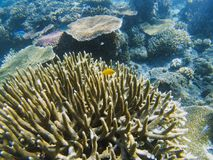 Yellow fish in spiky coral reef. Tropical seashore inhabitants underwater photo. Stock Photos