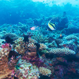 Yellow Fish in Tropical Coral Reef, Maldives Stock Photography