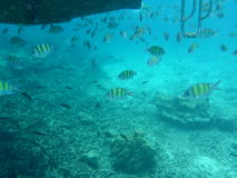 Yellow fish under water next to a boat Royalty Free Stock Photos