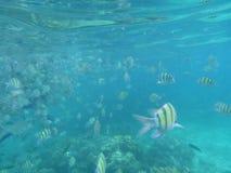 Yellow fish under water Stock Image
