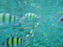 Yellow fish under water Stock Images