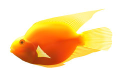 Yellow fish. Royalty Free Stock Photos