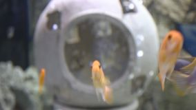 Yellow fishes and ancient bowl stock video footage