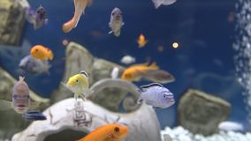 Yellow fishes and ancient bowl stock video