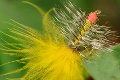 Yellow fishing fly Royalty Free Stock Photo